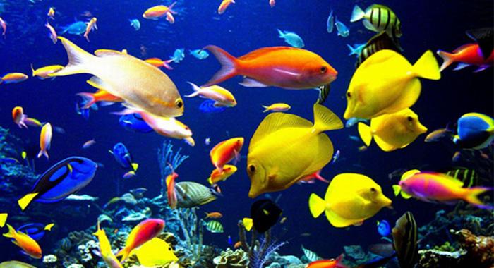几十年来,生态学家们开始渐渐了解自然选择和中性进化,即种内和种间变异是由遗传漂变和随机突变导致的,这在海洋微生物的生物地理分布模式中发挥了重要作用。在本研究中,Hellweger等人通过全球大洋表面循环模型(global surface ocean circulation model)模拟了有全部基因组的约十万个海生细菌细胞个体的分化、突变和死亡,对中性过程进行了量化。他们用该模型计算了长达十万年的数据,并使用先进的DNA序列比对算法(DNA alignment algorithms)对输出结果进行了分析
