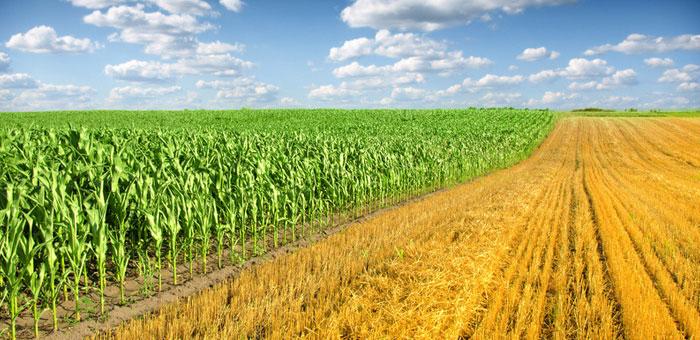 农作物增产致北半球二氧化碳循环改变