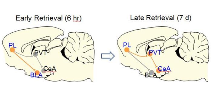 大脑新路径唤醒旧记忆