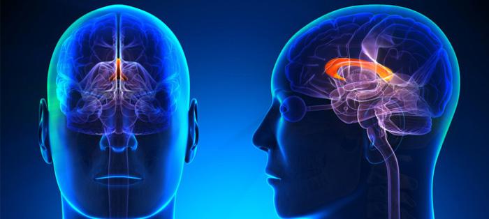 道德推理水平与大脑灰质含量有关