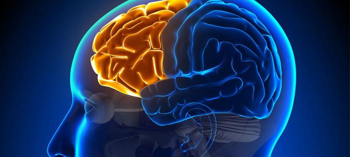 处理即时任务时,大脑如何运转?