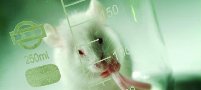 癫痫病患者打氨基酸有用吗?
