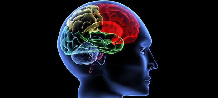 看见物体时,大脑是如何快速反应的?