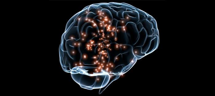 大脑活动的瞬间是怎样的?