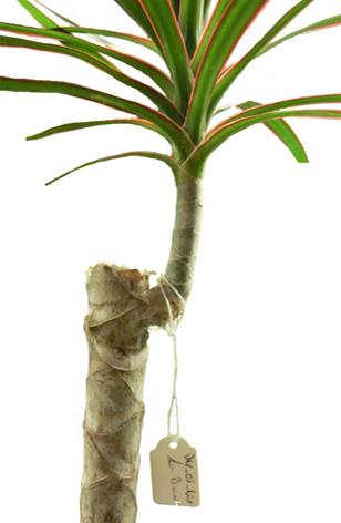 植物也可用于新型工程材料