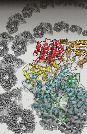 病毒研究新突破:微观视野中揭示蛋白结构
