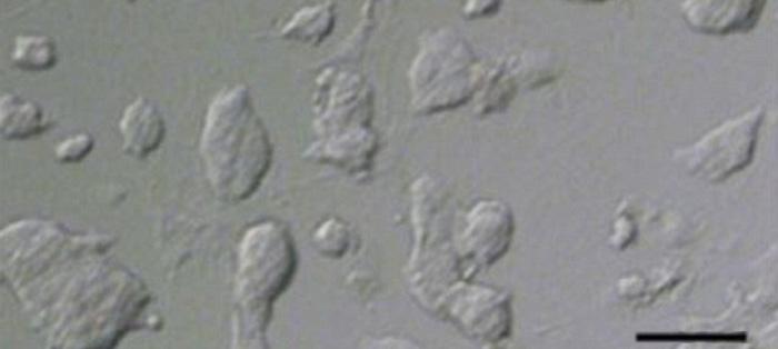 我国人造精子新突破:大量繁殖半克隆动物不是梦!