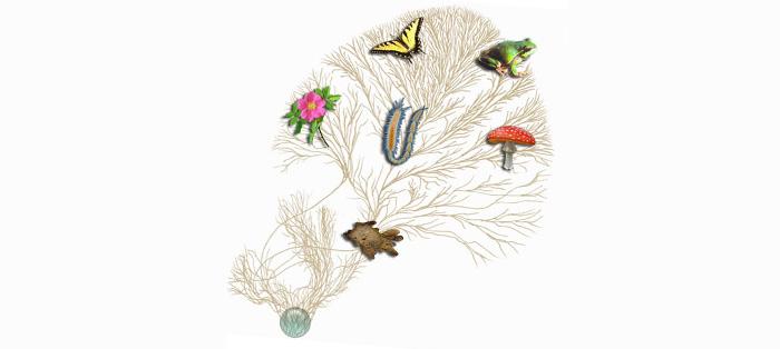 """图片说明:达尔文""""生命树""""的概念在于解释物种进化"""
